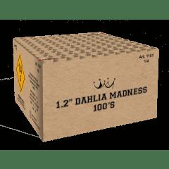 Dahlia Madness 138S (MGVN118155)